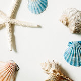 Shellfish and starfish on white background, marine decoration Royalty Free Stock Photography