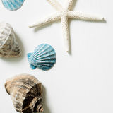 Shellfish and starfish on white background, marine decoration Stock Photography