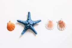 Shellfish and starfish on white background, summer marine decoration Royalty Free Stock Photos