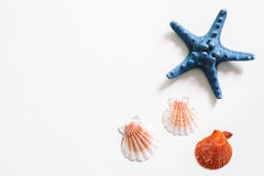Shellfish and starfish on white background, summer marine decoration Stock Images