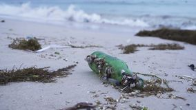 Shellfish stuck marine debris thrown out by waves on shore of South China Sea. Shellfish stuck marine debris thrown out by waves on the shore of South China Sea stock footage