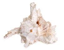 Shellfish in studio Stock Images