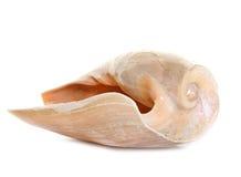 Shellfish in studio Stock Photos