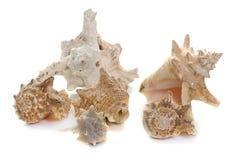 Shellfish in studio Royalty Free Stock Photo