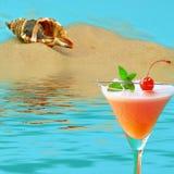 Shellfish on sun beach Stock Photography
