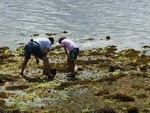 Shellfish w Galicia Obrazy Royalty Free