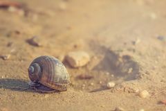 Shellfish are walking along the beach in the evening Stock Image