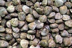 Shellfishes. At the market, Barcelona, Spain Stock Photography
