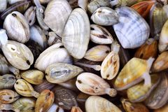 Shellfishs Stock Image