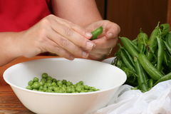 Shelling Fresh Garden Peas royalty free stock images