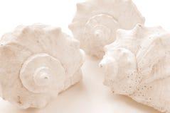 Shells Royalty Free Stock Photos