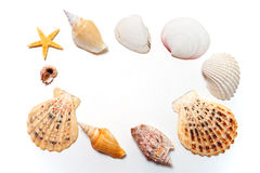 Shells Stock Photo