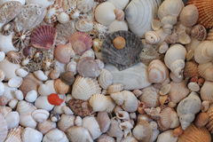 Shells Stockfotos