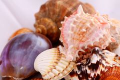 Shells. Some shells as a holiday background Stock Photo