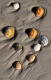 Shells Stock Afbeelding