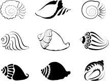Shells. Element  for design  illustration Stock Photos