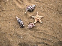 Shells. Few different seashells on sand background and starfish Stock Photo