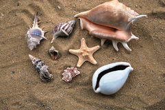 Shells. Few different seashells on sand background and starfish Royalty Free Stock Photography