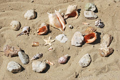 Shells. Few different seashells and starfish on beach sand background Royalty Free Stock Photography