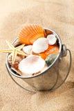 Shells Stock Photography