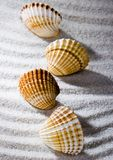 Shells Stock Photography
