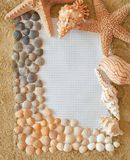 Shells. Sea shells with sand as background stock images