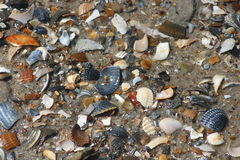 Shells. A collection of colorful shells in the sand Stock Photography