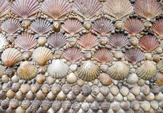 Shells Stock Photos