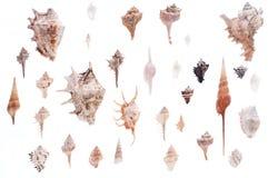 Shells Royalty Free Stock Photography