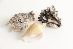 Shells Stockfotografie