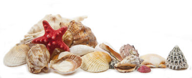 Shells lizenzfreies stockfoto