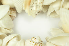 Shells. Row of shells in a circle on white background Royalty Free Stock Image