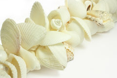 Shells. Row of shells on white background Royalty Free Stock Photos