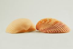 Shells 2682. Two shells looking at each other Royalty Free Stock Photography