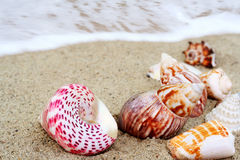 Shells. A group of colorfull seashells on sand stock photos