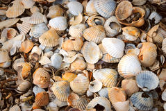 Shells. Beautyfull background of white, yellow and orange shells royalty free stock image