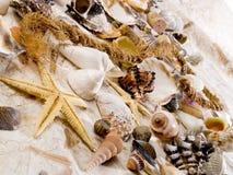 Shells Stockbild