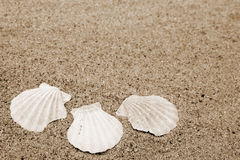 Shells. Different shells on a sand beach background. Sepia Stock Image
