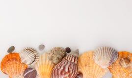 Shells Stock Photos