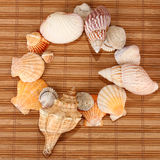 Shells Stockbild
