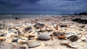 The shells Stock Image