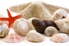 Shells. Isolated on a white background Stock Photos