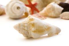 Shells Stock Afbeeldingen