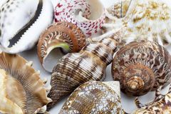 Shells royalty-vrije stock fotografie