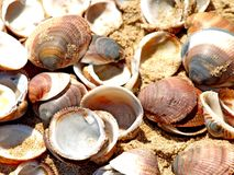 Shells. Stock photo with shells in the sand Stock Photo
