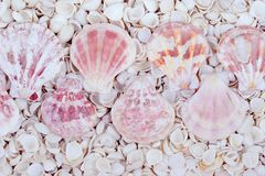 Shells. Background from a large number of beautiful variety of seashells royalty free stock photography