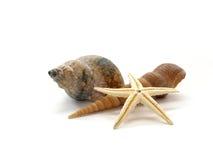 Shells Royalty-vrije Stock Afbeelding