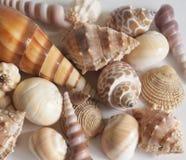 shells photographie stock libre de droits