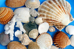 Shells Stockbilder