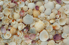 Shells. Background royalty free stock images